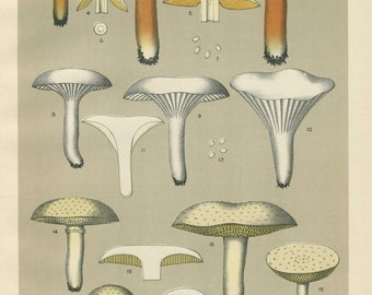 1900 Original Antique Print  - Book NY Museum - Vintage - Chromolithograph - Edible Mushrooms 1900