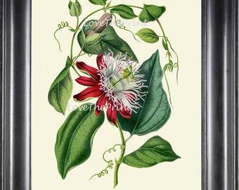 BOTANICAL PRINT HOUTTE  Art Print 166 Beautiful Antique Passion Flower llustration Interior Design Picture Tropical Room Decor to Frame