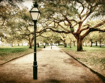 Charleston South Carolina Battery Park Fine Art Photography Southern Art Travel Photo Old Trees Nature Print Home Decor White Point Garden