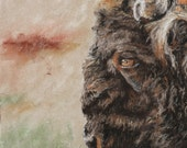 Fine Art 11x14 Print of an American Bison from a pastel original by me the artist