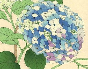 Japanese art, flowers floral botanical art prints, posters, Hydrangea, Hortensia FINE ART PRINT, japan flowers, woodblock prints, paintings