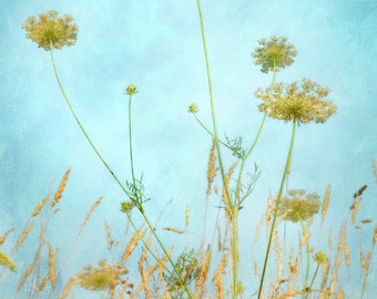 Wild Grass with Queen Ann's Lace - cyan -teal  -yellow- wall art