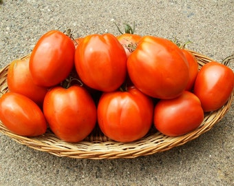 Organic Heirloom Amish Paste Tomato Seeds