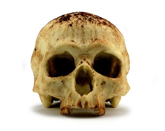 Special Edition White Chocolate Skull, Anatomically Correct Chocolate Skull