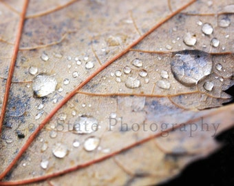 Autumn Leaf Wall Art. Nature Photography Print. Macro Photography. Raindrops Photo Print, Framed Photography, or Canvas Print. Home Decor.