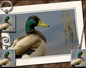 Mallard Photo Note Card Combo  - Mallard Pendant, Mallard Keyring, Mallard Ornament, Mallard Wine Charm - Mallard Greeting Card (GP28)