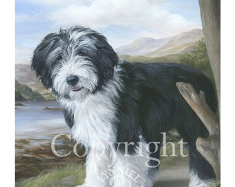 BEARDED COLLIE Young 'Beardie' fine art print