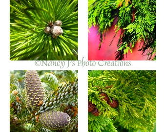 Evergreen Trees Print Set  -  4 Photo Set  ~ Nature Photography ~ Ikea Ribba Frame ~ 12x12 Macro ~ 30% Off Discounted Set ~ Green Wall Decor
