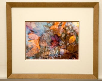 Fallen Leaves Brings Bare Trees - FRAMED