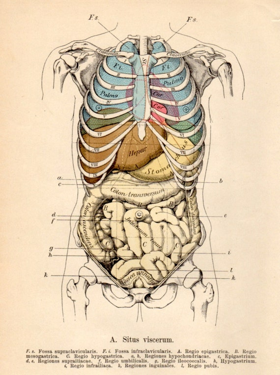 Human heart anatomy vintage - photo#17