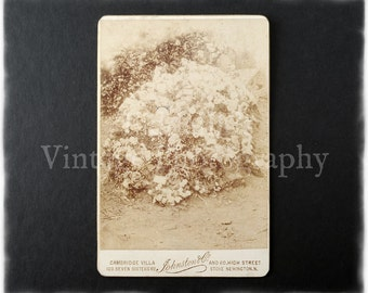 Cabinet Card Photograph of Floral Plants - Johnston & Co. Stoke Newington N.