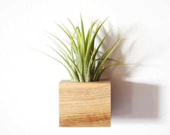 Magnetic Plant Holder with Air Plant Set