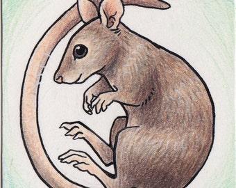 Original ACEO Rat or Mouse