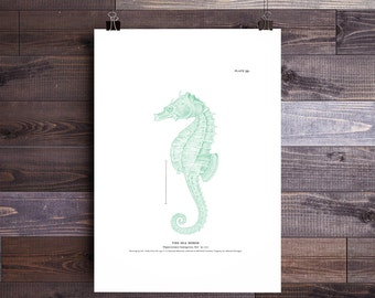 Seahorse Art in Green-Seahorse Print Beach Decor Nautical Decor Beach Art Nautical Print Beach Print Wall Art Gifts for Dad Father's Day