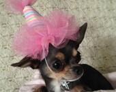 Mini Dog Party Hat