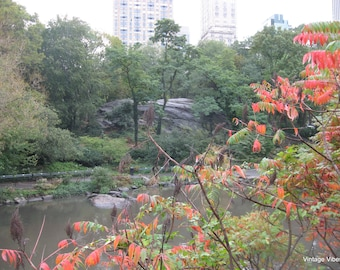 Central Park Photography Instant Download, Nature Art