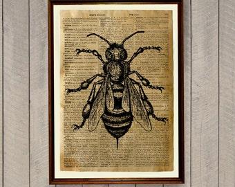 Botanic poster Insects print Bee decor WA326