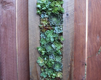 Succulent Living Wall. Handmade with Cedar.