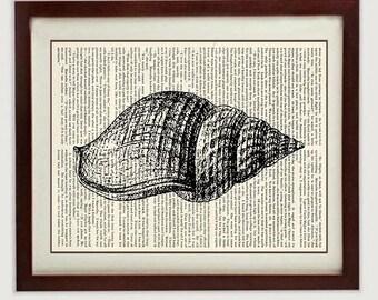 Tulip Seashell Shell Vintage Style Ocean Nautical Print Art Book Page Dictionary Printable INSTANT DOWNLOAD Marine Beach Wall Decor Bathroom