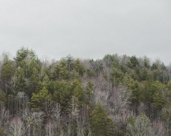 Tree Photography, Forest, Forest Photography, Tree, Green Wall Decor, Fine Art Photography, Nature Photography, Wall Decor, Landscape, Photo