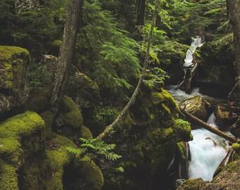 Avalanche Creek, GNP