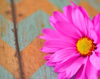 Pink daisy on chevron