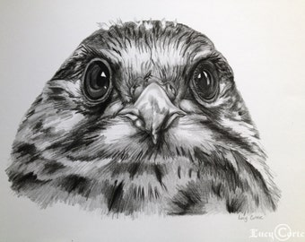 "PRINT of a Pencil Drawing of a ""Kestrel Study"""