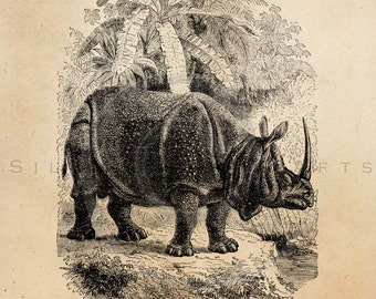 Vintage Rhinoceros Illustration Printable Rhinos 1800s Antique Print Instant Download Digital Image Clip Art Retro Black and White Drawing