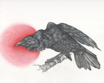 raven after Dürer