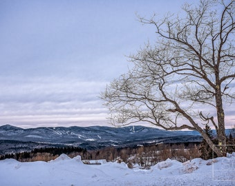 A Tree with a View - Vermont Landscape Photo Art Print