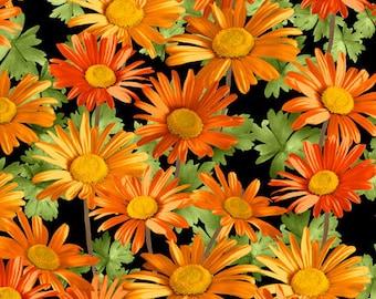 Sunshower - Orange Daisies on Black Fabric
