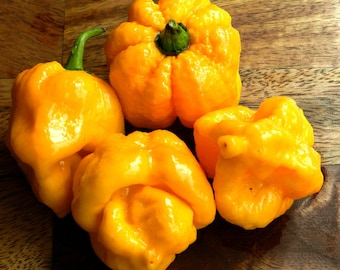 1000 seeds Trinidad 7 POT (7 POD) Yellow chili Superhot pepper world record rare