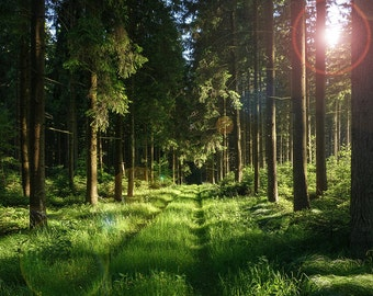 Forest, Nature Photography, Green, Trees, Woods, Wilderness, Large Wall Art, Environment, Country, Rustic Home Decor, Sun Flare