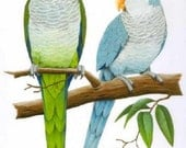 2 Quaker Parrots... ~Counted~ Cross Stitch Pattern ~Computer Generated~ Birds BBXS