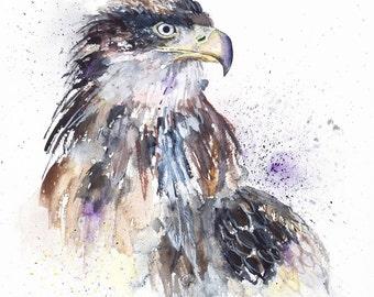 Juvenile Bald Eagle Watercolour Print