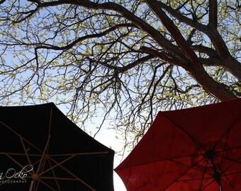 Umbrellas Under Trees Photography Print