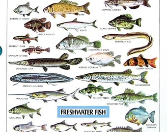 fish dictionary with pictures pdf