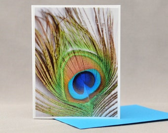 Peacock Feather Close up Card