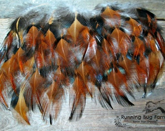 """Loose Feathers Real Bird Feathers Natural Red Feathers Golden Laced Cochin Rooster Feathers Black Metallic Feathers 25 @ 1.5 - 2.5"""" / 7339"""