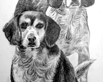 Pet Portrait Graphite Pencil 11x14 hand drawn