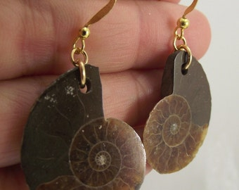 Fossil Ammonite Earrings, Gold Earrings