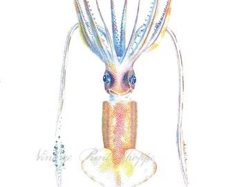 Squid print Vintage Scientific Illustration reproduction print 5x7 print Squid Art Home Decor Naturalist print beach art bathroom decor