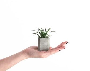 1 Mini Square Concrete Air Plant Planter, Cement Planter, Wedding Favors, Angular Planter, Geometric, Modern, Vase, Tillandsia