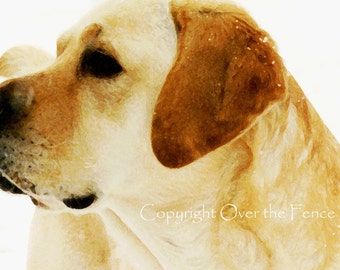 YELLOW LABRADOR Christmas Card Labrador in Snow