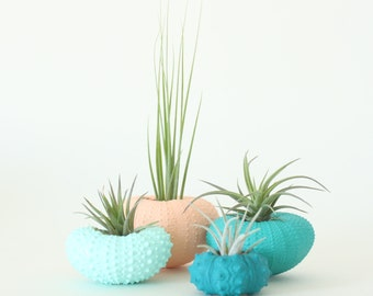 Teeny Tiny Air Plant Urchin Planter Set with Air Plants  -  Peach, Teal, Aqua, Greens, Blues, Apricot