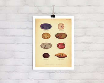 Unique Potato Botanical Art Print | Weird Kitchen Art | Anatomical Art | Funny Botanical | Strange | Surrealism | Kitchen Art Humor