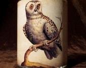 Vintage Owl image Candle holder/ luminary