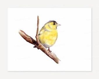 Yellow Bird Watercolor Painting - Fine Art Giclee Print - Rustic home decor, Woodland wall art, Birdwatching gift - Grey, black, yellow