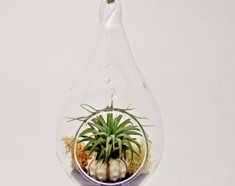 FREE SHIPPING // Air Plant Teardrop Terrarium with Purple Sand, Shell and Moss