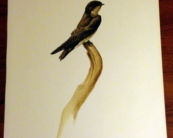 JF Lansdowne Print Book Plate Art, Rough-Winged Swallow